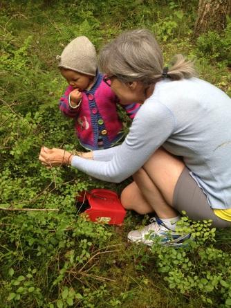 Vi plukker blåbær