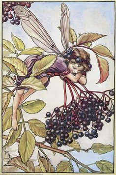 Cicely Mary Barker's Elderberry Fairy