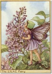 Cicely Mary Barker's Lilac Fairy